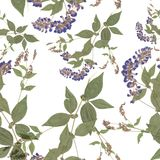 Herbarium, dried flowers on a white background. Seamless pattern Royalty Free Stock Photo