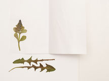 Herbarium of dried plants on a sheet of paper stock photography