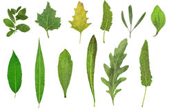 Herbarium. Of dry leaves and plants isolated on white background Stock Photos