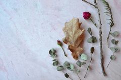 Herbarium of eucalyptus, oak leaves and roses on the pink concrete background. royalty free stock photography