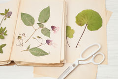 Herbarium of flowers and grasses Royalty Free Stock Photos