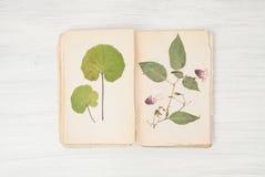 Herbarium of flowers and grasses Stock Photos