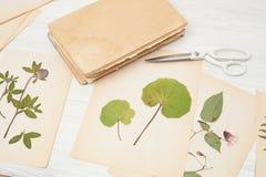 Herbarium of flowers and grasses Stock Image