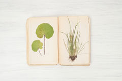 Herbarium of flowers and grasses,wheatgrass, wheat grass, couch stock photography