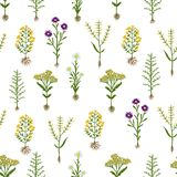 Herbarium flowers with roots, seamless pattern Stock Images