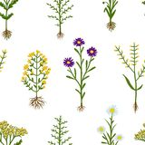 Herbarium flowers with roots, seamless pattern Royalty Free Stock Photography