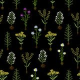 Herbarium flowers with roots, seamless pattern Stock Image