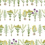 Herbarium flowers with roots, seamless pattern Royalty Free Stock Photos
