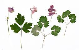 Herbarium från den ordnade torkade blomstra blomman i rad Royaltyfria Foton