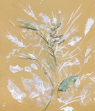 Herbarium with Green summer meadow herbs and leaves Royalty Free Stock Image
