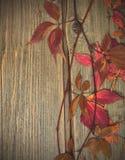 Herbarium Het stilleven van de herfst Stock Afbeelding