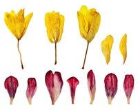 Herbarium kwiatów płatki fotografia stock