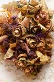 Herbarium leaf Royalty Free Stock Image