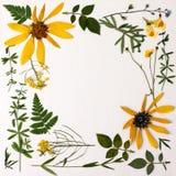 Herbarium met wilde bloemen, takken, bladeren Plantkunde op een witte achtergrond, prentbriefkaar stock foto's