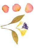 herbarium odizolowywający Fotografia Stock