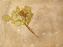 Herbarium on a old dirty canvas. Royalty Free Stock Photo