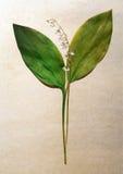 Herbarium. Stock Photography