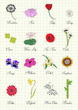 Herbarium page with flowers Stock Images