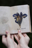 Herbarium plant in the herbarium-book girl's hands Royalty Free Stock Images