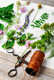 Herbarium of plants Royalty Free Stock Images
