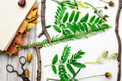 Herbarium of plants Stock Photo