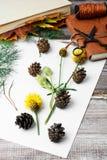 Herbarium of plants Stock Images
