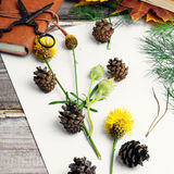 Herbarium of plants Royalty Free Stock Photo