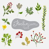 Herbarium set. Different plants. Stock Photo