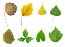 Herbarium. Set of dry leaves isolated on white background. Herbarium Royalty Free Stock Photo