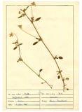 Herbarium sheet - 2/30 Stock Photo