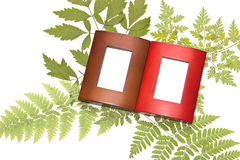 Herbarium and two frame. The dried plants and two frames on a white background Royalty Free Stock Photo
