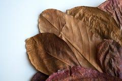 Herbarium van brons het droge bladeren stock afbeelding
