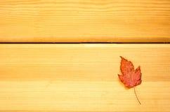Herbariumholztisch Blätter des Herbstes trockener bunter Stockbild