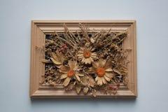 Herbariumsamenstelling binnen houten kader stock fotografie
