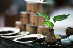 Herbata Zdjęcia Stock