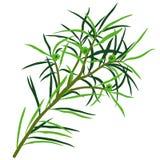 herbata drzewo ilustracja wektor