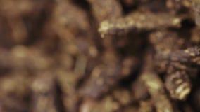 Herbata fermentuj? zdjęcie wideo