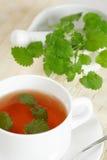 herbata miętowa obrazy royalty free