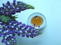 Herbata w białej filiżance z błękitnymi lupine kwiatami, błękitny tło obraz royalty free