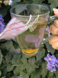 Herbata w ogródzie 2 Zdjęcie Stock