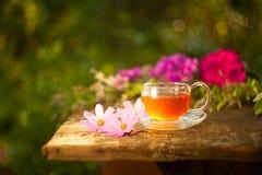 Herbata w pięknej filiżance Zdjęcie Stock