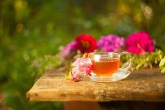 Herbata w pięknej filiżance Fotografia Royalty Free