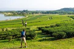 Herbata w Tajlandia Zdjęcie Stock