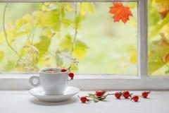 Herbata z jagodami dogrose na windowsill Obrazy Royalty Free