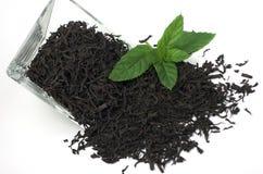 Herbata z mennicą Zdjęcie Royalty Free
