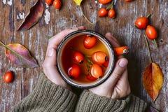 Herbata z rosehips Obraz Royalty Free