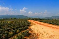 Herbaty gospodarstwo rolne Fotografia Royalty Free