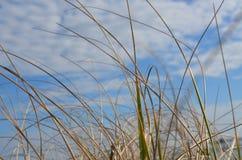 Herbe à la plage Photo libre de droits