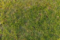 herbe à partir de dessus Image libre de droits