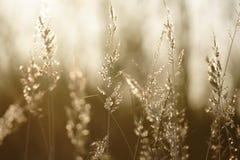 Herbe à une lumière du soleil Photographie stock libre de droits
